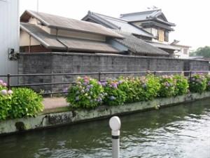 harunonoajisai