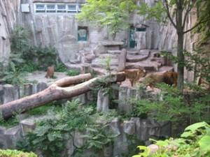 lion0802
