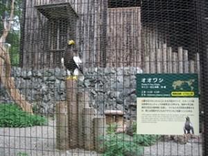 oowashi0804
